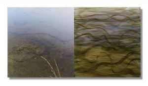 Photo/Painting Correspondence – <b>WasserLinien (diptych)</b>, C-Print/Diaplex and painting on acrylic glass, each 50 x 50 x 2 cm, 2012